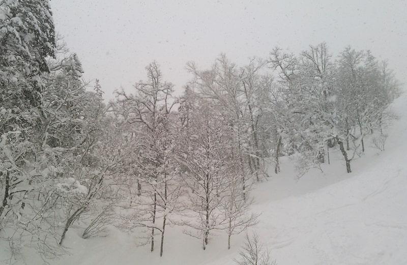 富良野スキー場 リフト券 割引 プレミアムコース 口コミ ツアー アクセス