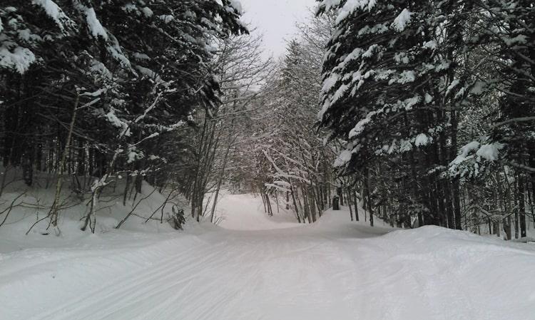 富良野スキー場 リフト券 割引き 天気 積雪 バックカントリー 林間コース 口コミ